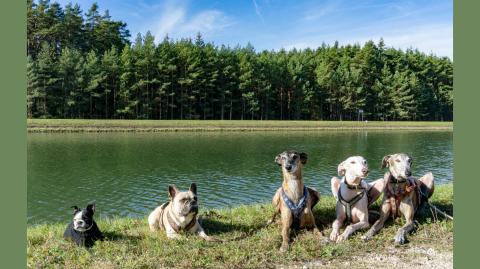 Urlaub mit Hund in Nürnberg Umgebung, Deutschland