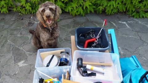 Roadtrip mit Hund: 7 Tipps zum Reisen im Wohnmobil plus Packliste