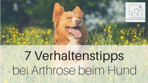 7 wichtige Verhaltenstipps bei Arthrose beim Hund