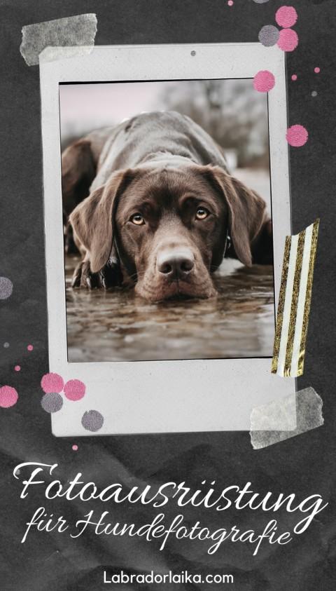 Fotoausrüstung für Hundefotografie