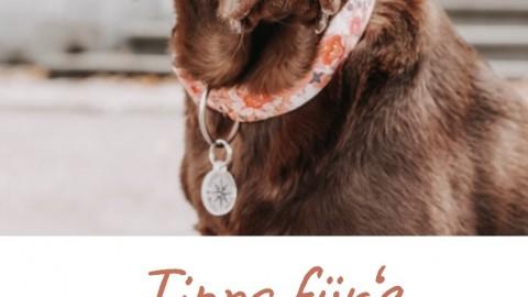 Tipps für's Fotoshooting mit Hund