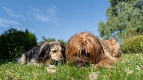 8 Gründe warum Du Dein Leben mit einem Hund teilen solltest