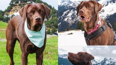 Österreich/ Vorarlberg mit Hund
