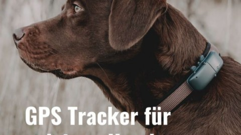 GPS Tracker für Hunde