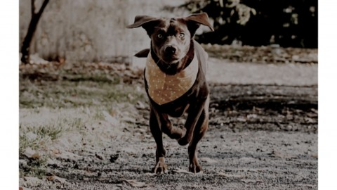 Hundesport- Dummytraining