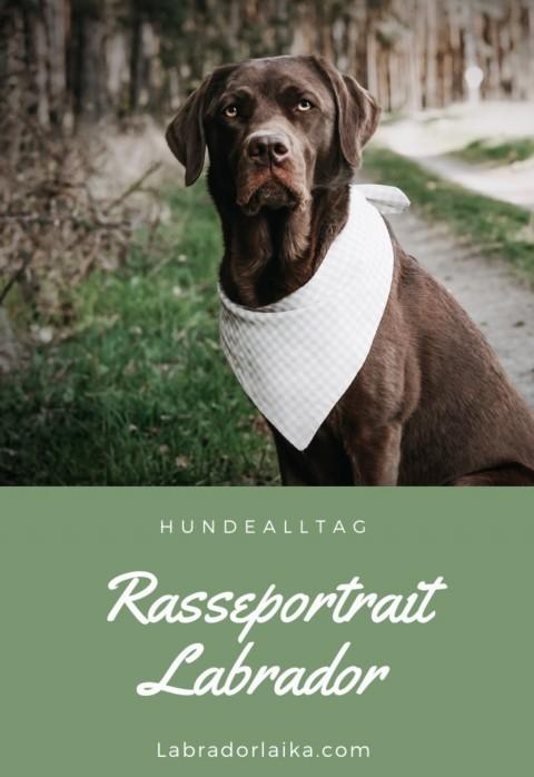 Rasseportrait Labrador Retriever, Labrador als Anfängerhund, Familienhund