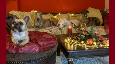 Murphy und die 3 Galgos aus dem Morgenland – eine tierische Weihnachtsgeschichte