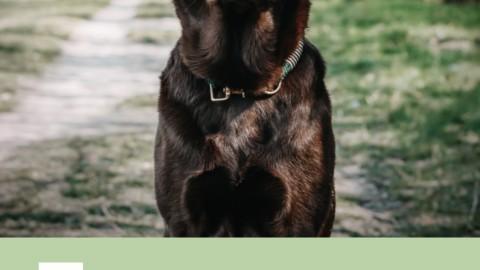 DIY für Hunde – Halsband aus Tau selbst machen