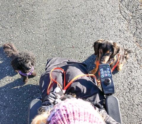 10 Tipps für erfolgreiches Hundetraining