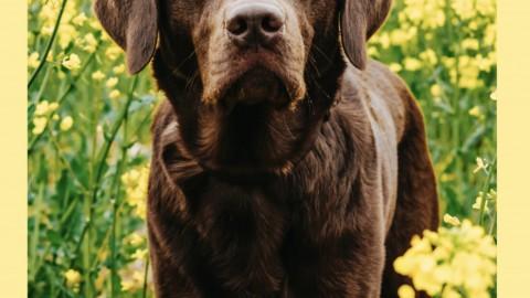 Spaziergänge mit dem Hund abwechslungsreich gestalten – Gassi gehen Hundealltag