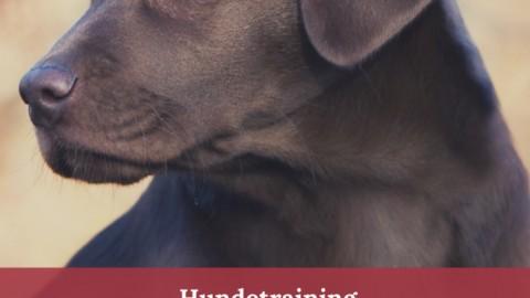 Warum Hundekontakt an der Leine gefährlich ist