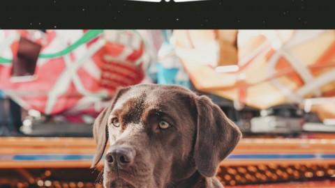 Übungen zur Impulskontrolle für Hunde