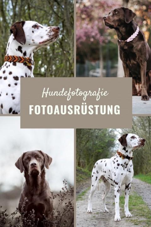 Meine Fotoausrüstung für Hundefotografie