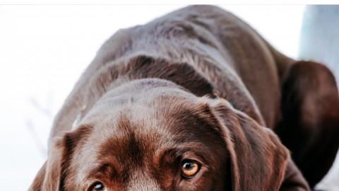 Krankenversicherung für Hunde – Ein Vergleich
