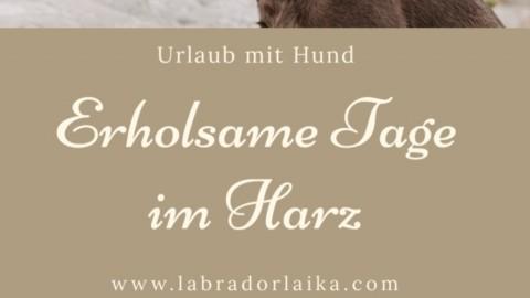 Wanderurlaub im Harz