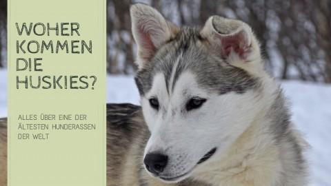 Die Herkunft und Geschichte der Schlittenhunde und Huskies