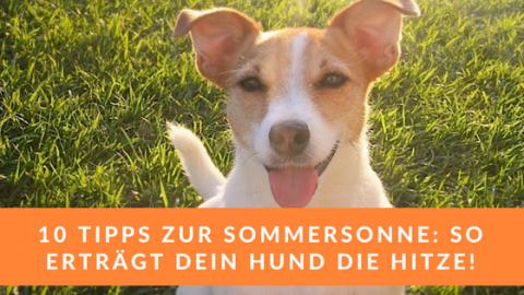 Sommer & Sonne: 10 Tipps für deinen Hund in der Hitze!