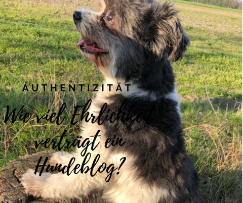 Authentizität: Wie viel Ehrlichkeit verträgt ein Hundeblog?