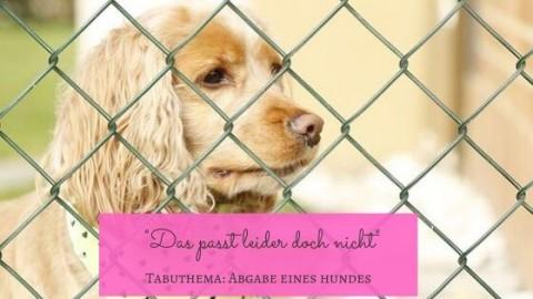 """Tierschutz-Hund wieder abgeben, weil es """"doch nicht passt""""?"""