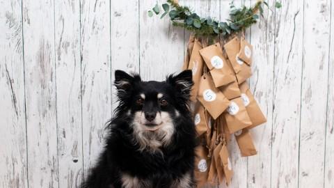 DIY|| Adventskalender für Hunde Selbermachen – mit Gewinnspiel