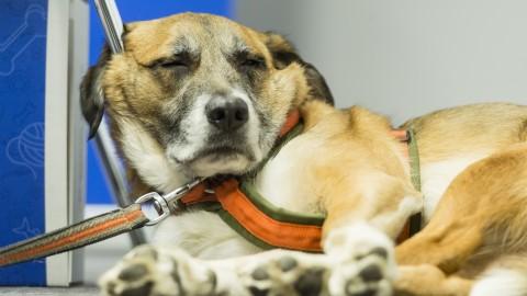 Physiotherapie, Massage-, und Entspannungstechniken für Hunde