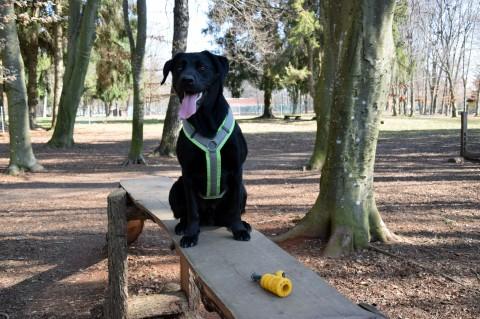 Strandcamping Waging am See – Camping mit Hund in Bayern