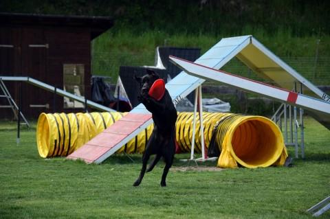 Urlaub mit Hund im Hundehotel Grimming