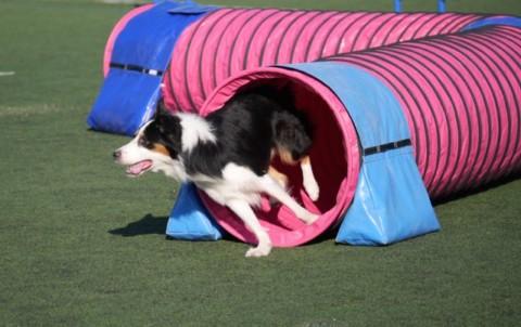 Diese 7 Dinge solltest Du beim Agility unbedingt beachten – Gastbeitrag Hund-unterwegs.de