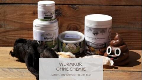 Natürliche Wurmkur für Hunde – Pflanzliche Alternativen zur Entwurmung im Test