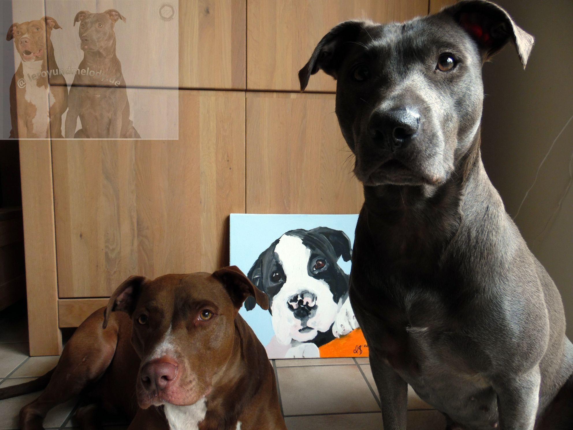 Spendenaktionen für Hunde