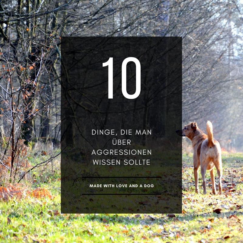 10 Dinge, die man über Aggressionen bei Hundenwissen sollte