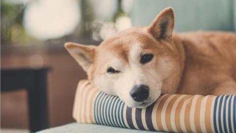 Allergien beim Hund: Symptome, Identifizierung und Therapie