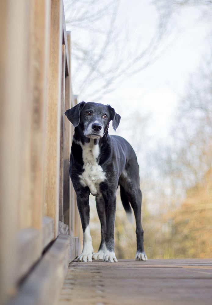 Wie verändert sich das Leben mit einem Seniorenhund