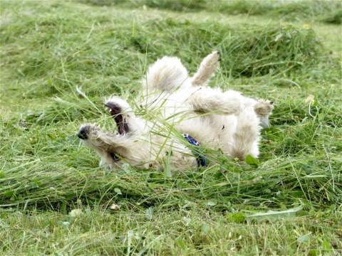 Alphabet Hund
