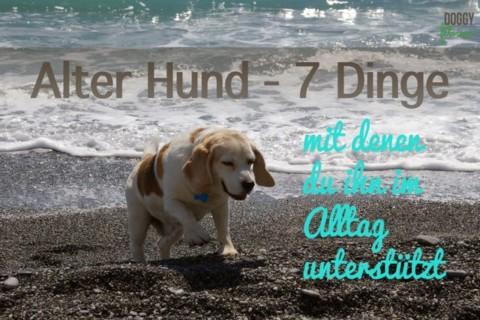 Alter Hund – 7 Dinge mit denen du ihn im Alltag unterstützt