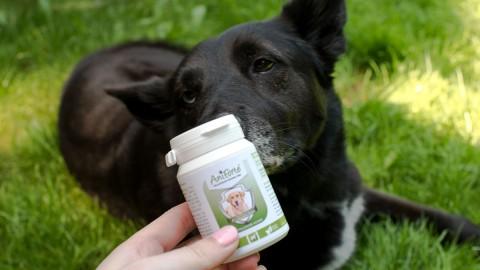 Natürlicher Floh- und Zeckenschutz – so schützt du deinen Hund! + kostenloser Zeckenschutzplan
