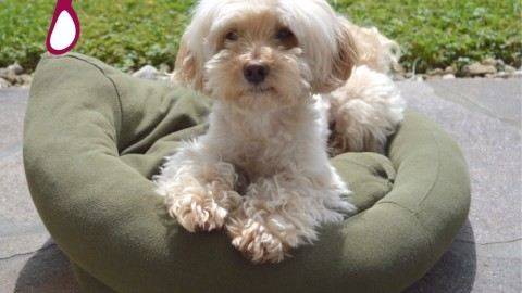 Schnelles Hundebett – Upcycling aus altem Pullover