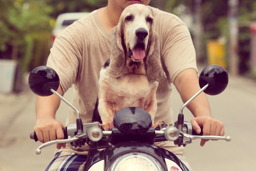 Anschnallpflicht für Hunde
