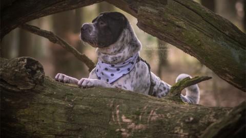 Projekt: Hundeleben in Deutschland