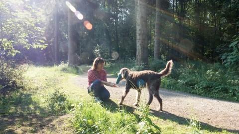 Antijagdtraining oder ein Hoch auf die wunderbaren Talente von Hunden mit Jagdleidenschaft [Ein Interview]