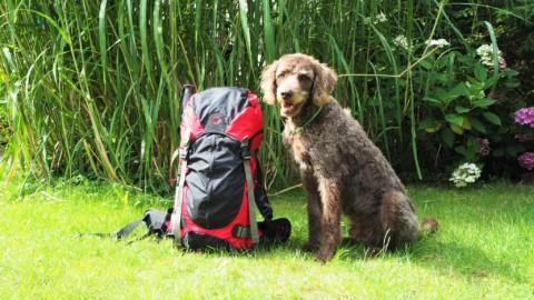 Packliste Mehrtageswanderung mit Hund