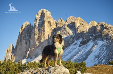 Drei Tipps für das passende Geschirr zum Berg-Wandern mit Hund