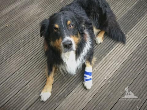 Was gehört ins ideale Erste-Hilfe-Set fürs Berg-Wandern mit Hund?