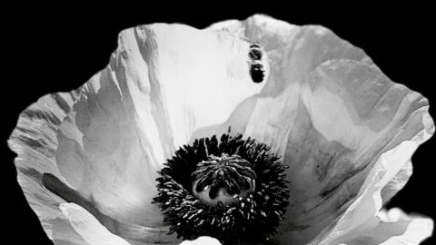 Artensterben: Eindrucksvolle Bilder, aktuelle Fakten
