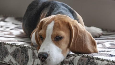 Arthritis beim Hund – Ursachen, Symptome & Folgen