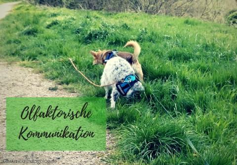 Eine Welt voller Düfte – olfaktorische Kommunikation