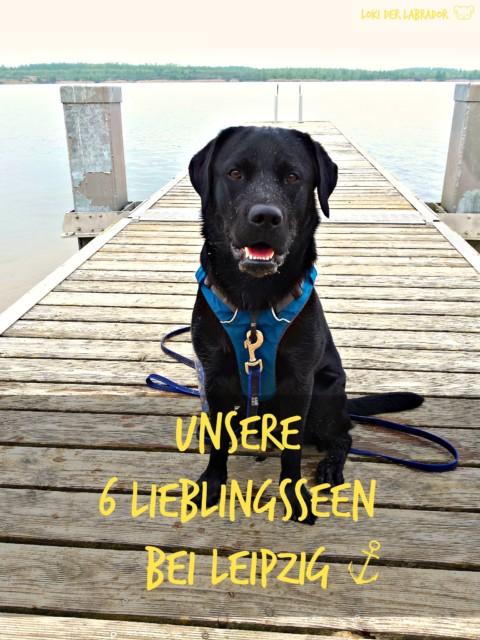Ausflugsziele mit Hund in und um Leipzig – unsere 6 Lieblingsseen