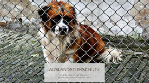 Adoption aus dem Ausland – So findest du eine seriöse Tierschutzorganisation