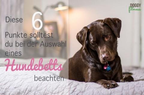 Diese 6 Punkte solltest du bei der Auswahl eines Hundebetts beachten!