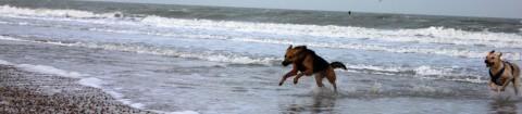Genießen oder Auszeit mit Hund an der holländischen Nordseeküste